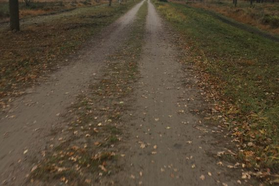 Lüneburger Heide auf dem Gravelbike
